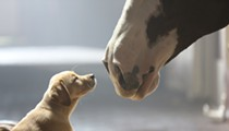 America Totally Loses It Over Budweiser's Adorable Super Bowl Commercial
