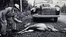 Eating Roadkill's Okay. Organic Picnics Aren't.