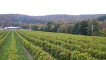 Augusta Winery on Today, Day Before Yesterday