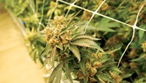 Follow That Flower: A Tour Through Missouri's Cannabis Cultivation