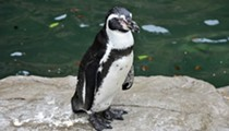 Hartmann: Saint Louis Zoo Needs to Ditch its 20th Century Tourism Model
