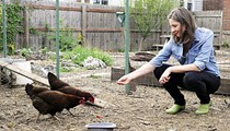 Confessions Of A South Side Chicken Farmer