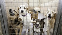 Missouri Dog Breeder Loses Defamation Suit Against Humane Society