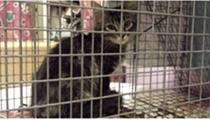 A Rally Cat Lookalike Is in Custody — Could It Be the One?
