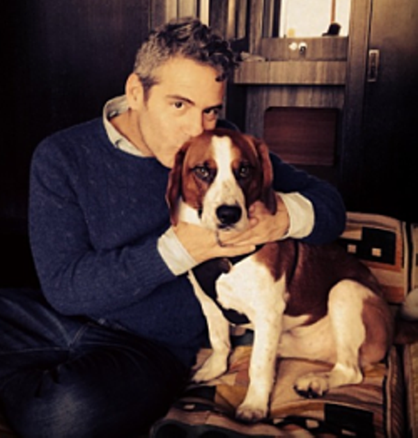 Andy Cohen New York City House Tour: St. Louis Native/Bravo Exec Andy Cohen's Twitter Chat Goes