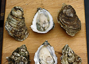 How Do You Like Your Oysters?: This Valentine's weekend may be your best chance to eat oysters for years to come