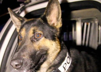 Photos: Fired Columbia Officer Rob Sanders Gets His Dog Fano Back After Long Separation