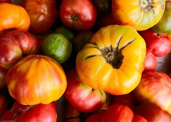 """The Good, the Big and the Ugly"" Tomato Contest Invites You to Strut Your Tomato Stuff"