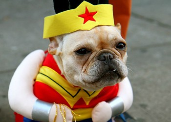 Barktoberfest Returns to Urban Chestnut Because Dogs in Costumes Are the Best