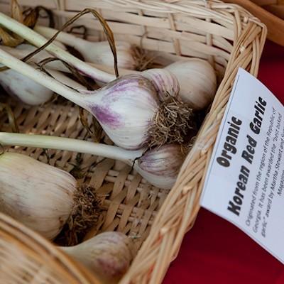 St. Louis Garlic Festival 2014