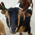 These Saint Louis Zoo Animals Will Put You Right in the Holiday Spirit
