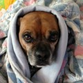 These St. Louis Dogs Are Totally Over the Cold