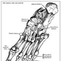The Myth of the Buried Foot
