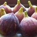 Fig-get Me Not
