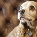 In Missouri, it's one puppy mill down, and how many more to go?