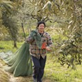 Olive oil enthusiasts in St. Louis are saving Greece's Olea Estates
