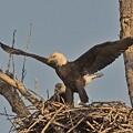 Perfectly Eagle