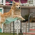 Jump More, Bark Less