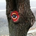 Eyed in the Loop: Tree With Peat Wollaeger Stencil