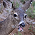 Town & Country Neighbors to Hold Candlelight Vigil for Dead Deer