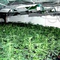 Feds Bust Major St. Louis Marijuana Network; 24 People (with Intriguing Aliases) Indicted