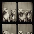 Lynn Terry, St. Louis Photographer, Captures Smooching Pooches in Doggie Photo Booth