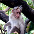 Judge to Missouri Woman: Your Monkey is Not a Service Animal