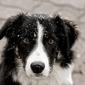 One Rescue Group's Adorably Low-Tech Campaign to Save Dogs From Freezing to Death