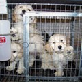 Anti-Puppy Mill Campaign Racks Up Out-of-Town Donations