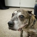 Photos: Dogs Rescued from Largest Dog-Fighting Ring in U.S. History