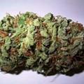 Prison Work Crew Finds Million-Dollar Marijuana Stash On Side of Road