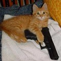 """Good Samaritan"" Shot Himself While Trying to Kill Feral Cat, Wasn't Robbed By Gunman"