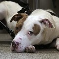 Ron Jackson, Accused Dog Shooter, Strangler: Circuit Attorney Dismisses Case (PHOTOS)