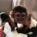 Missouri Woman Gets Pepper-Sprayed and Has Monkey Stolen in Colorado