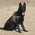 PHOTOS: Jefferson County Police Dogs Get Bulletproof Vests