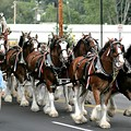Wanna Rent the A-B Clydesdales For the Day? It's Gonna Cost You