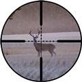 Hunters Will Still Have Plenty of Deer to Shoot This Season