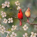 Effort to Protect Missouri Birds, Influence Casino Decision Coming to Cardinals Game Tonight