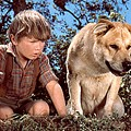 Madison County Man Arrested For Re-Enacting Old Yeller