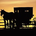 New and Old Worlds Collide: Was Man Texting and Driving When He Struck Amish Buggy?