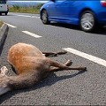 Driver Killed in Crash After Trying to Avoid Dead Deer