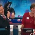 [VIDEO] Cat Goes Baffroom on KSDK Channel 5 Anchor Pat McGonigle