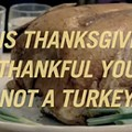 Video: Happy Thanksgiving from PETA