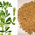 Fenugreek: It's What Makes Your Breasts Better!