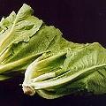 Listeria and Metal Lead to Lettuce and Velveeta Recalls