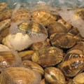 FDA Warns on Korean Shellfish