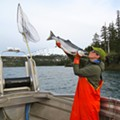 Rock-Bottom Copper River Sockeye Salmon Prices Put Gut Check in the Red