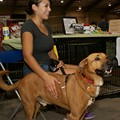 2018 St. Louis Pet Expo Finds New Home in St. Charles, But Troubles Remain