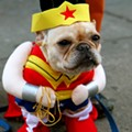 45 Percent of Missouri Dog Owners Dress Up Their Pets for Halloween