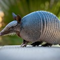 Armadillos Are Invading St. Louis